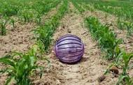 כדור בדולח חקלאי
