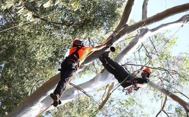 אליפות ישראל בטיפוס עצים ה-2