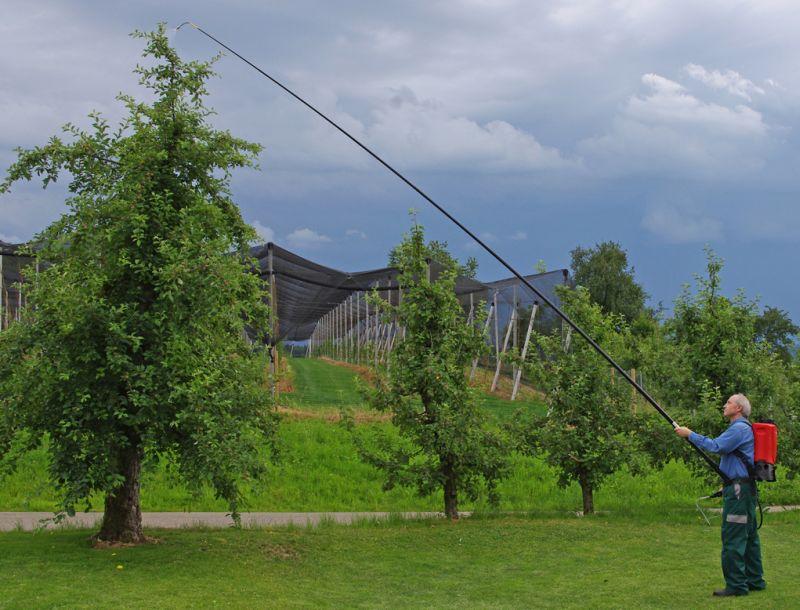 ריסוס עץ אגס עתיק בשוויץ. הודות לצינור הריסוס הטלסקופי ניתן לחסוך הן ברמת הסיכון והן בזמן הנדרש לעלות ולרדת מהסולם, והעברתו