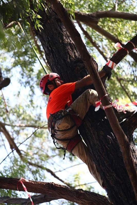 אליפות ישראל בטיפוס עצים