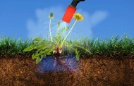 בלי רעלים: חיסול עשבים שוטים